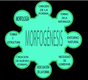 Inicio de Morfogénesis: Identidad yPaisaje