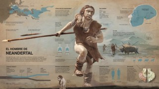 neanderthal nuevo illustrator