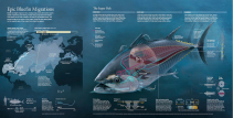 epic-bluefin-migrations